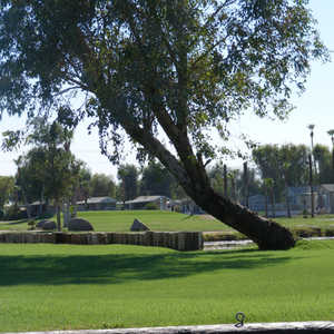 Desert Trail RV Resort &amp; GC