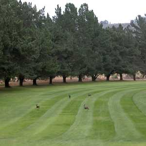 Marshallia Ranch GC