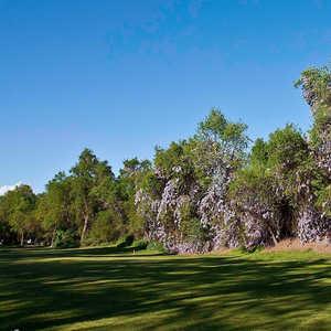 Sherwood Forest GC: #8