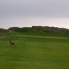 Golfers aren't the only creatures who enjoy Pacific Grove Golf Links.