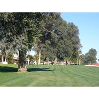 Palm Desert CC is one of the oldest courses in Palm Springs; you can see it in the trees.