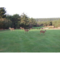 Graves design can look even tougher if an army of deer blocks your path at Sea Ranch Golf Links.