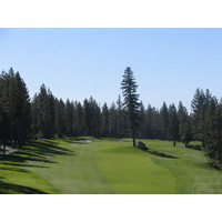 Sometimes the tree is right in the fairway at the Tahoe area's Coyote Moon Golf Course.