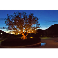 A beautiful view of the night sky with a country-style decorated tree in the foreground at Lost Canyons Golf Club.