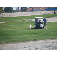 Dogs on the course is part of Cimarron's off-beat charm.